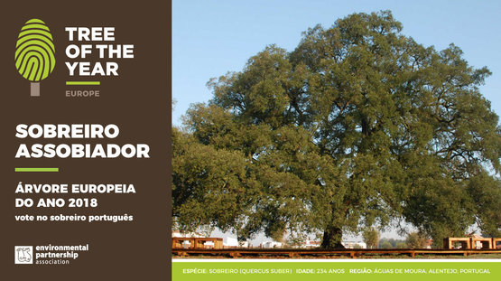 "Concurso ""Tree of the Year"" 2018 - vote no Sobreiro Português"